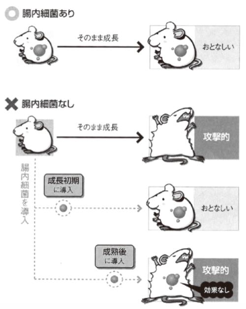 マウスと腸