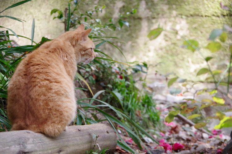 猫背が増えた