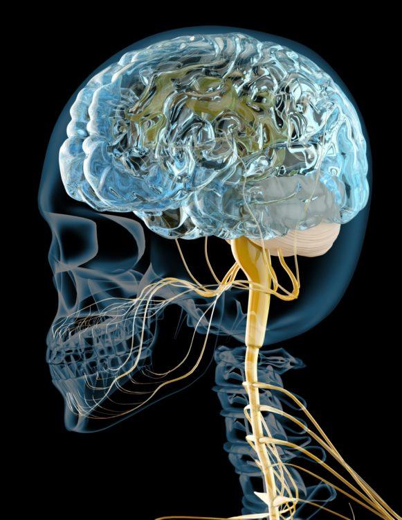 ダイエットと脳の指令
