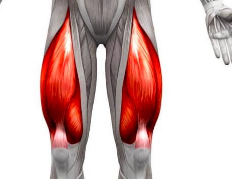 ダイエットに影響する大腿四頭筋