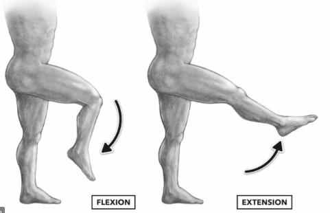 膝 伸展・屈曲