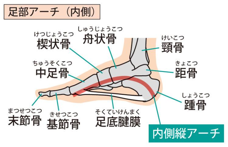 O脚改善筋トレ:足趾